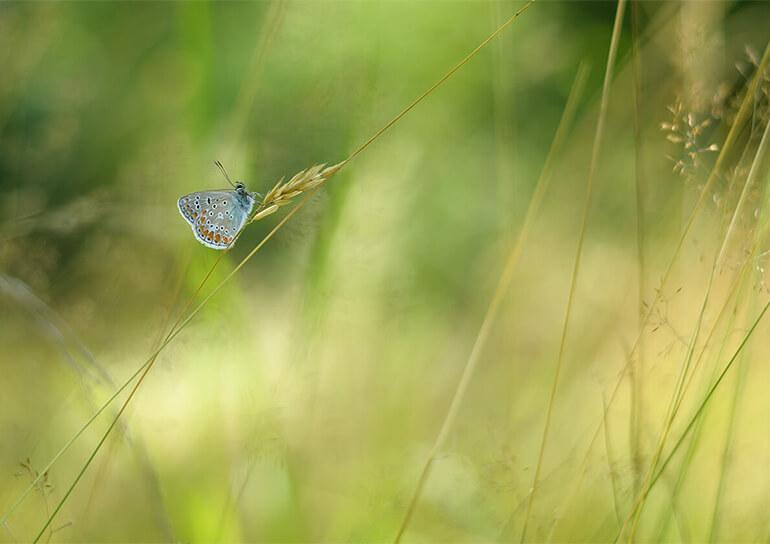 Schmetterling auf einer Wiese
